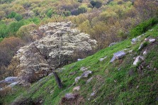 Dogwood on Lookout Mountain, Tennessee