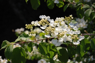 White blooms on dark background