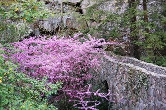 Redbud in Bloom, Rock City, Lookout Mountain, Tennessee