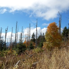 Grass & Trees on Clingman's Dome