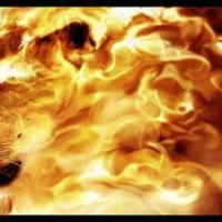 The Fiery Lion
