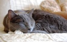 Paws_sleeping