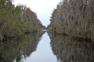 Okefenokee Canal in the Okefenokee Swamp, Georgia