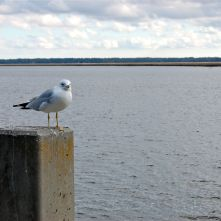 Seagull on Perch at Saint Marys, Georgia