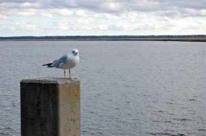 Seagull on Perch at Saint Marys, Georgia