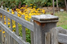 photo of wooden fence with black-eyed susans