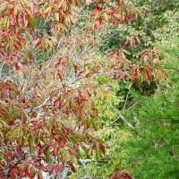 Photo Friday: Autumn Trees on Sawnee Mountain