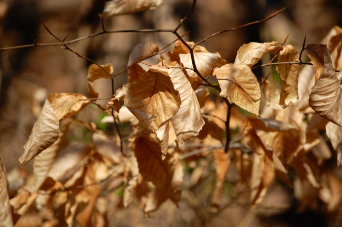 Winter Leaves