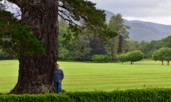Lon and an ancient tree, Muckross House