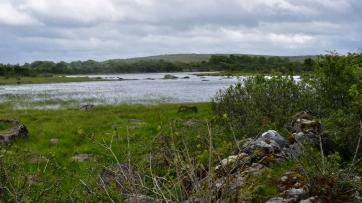 Burren Marsh
